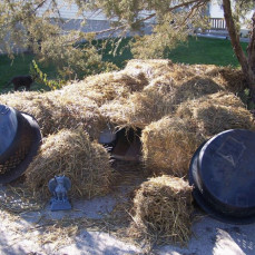 Straw shelter for feral cats - Dorothy Parker