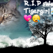 No more pain, be at peace. Goodbye Tigergirl, You almost made it to 20 yrs. 💔  12/6/19  - Dorothy Parker