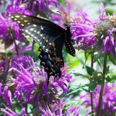 The flowers you planted in the yard attracted butterflies & hummingbirds  (Photo taken by Dorothy Parker) - Dorothy Parker