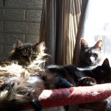 Shirley, Shadow & Pixie - Dorothy Parker