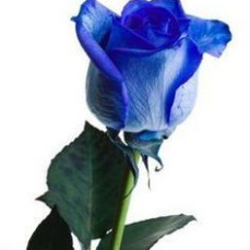I remember how much you liked blue roses... - Dorothy Parker