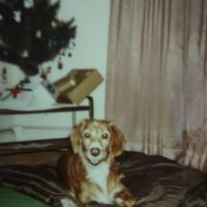 Jody's dog Token - Dorothy Parker
