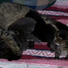 Our babies when the were small & Momma Squeaker with Shirley, Merlin, Shadow & Laverne - Dorothy Parker