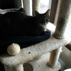 After Jody passed, Boo-boo aka B.B was very sad, I let her lay on Jody's sweater - Dorothy Parker