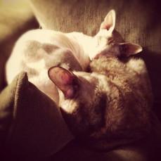 Jada cuddling with her pal, Junie - Tammy