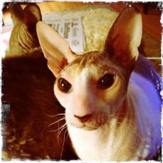 Jada's true curious personality. - Tammy