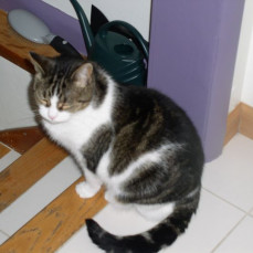 MEOW...Mac terrorized me for the first year we moved in and you saved me on a regular basis. Thank you little brother for having  my tail. See you when I cross the rainbow bridge - I'm already 16 so keep looking for me. - Bonnie Cat - sister