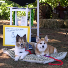 Mac liked to work on the weekends with his step brother Max. Together they became the face of Clock Timeless Pets. Here is a picture of him working with his brother at the Dog Star Ranch in Muskegon, MI. - Mom
