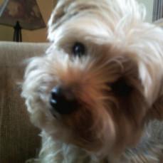- Clock Timeless Pets   Pet Crematory   Urns   Pet Loss